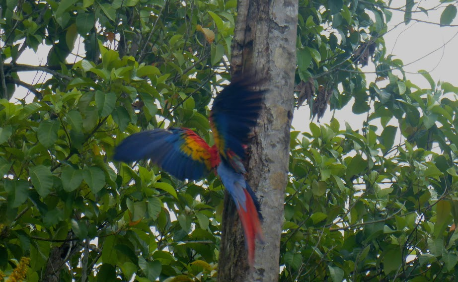 Costa Rica 2021 – Drake Bay &Corcovado
